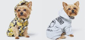 Moschino x H&M: limited edition per cani