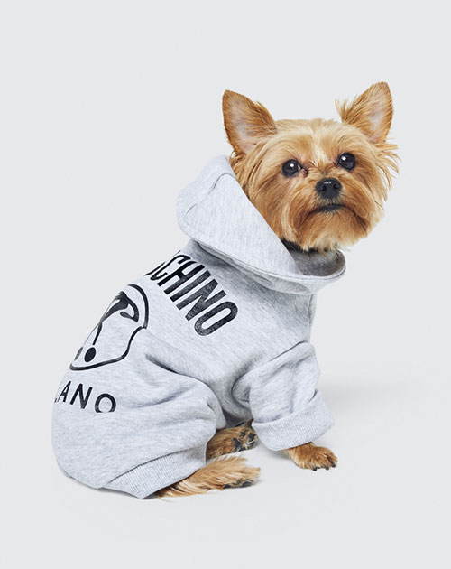 H&M x Moschino to include pets accessories